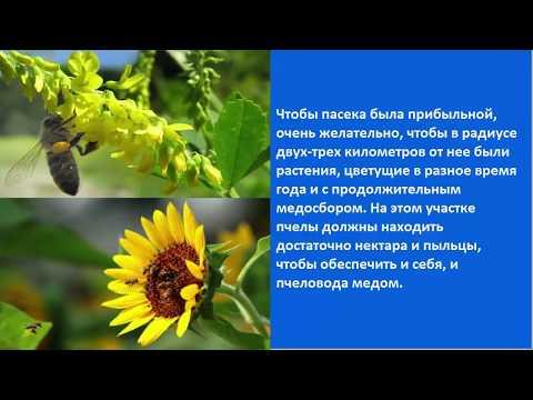 Где разместить ульи с пчелами