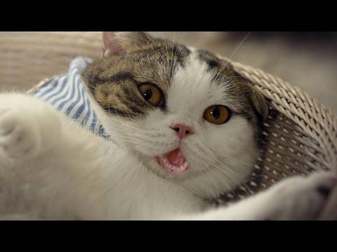 """ประกาศจากหมู่แมว """"เราจะไม่ทน ..."""""""