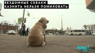 Бездомные собаки: казнить нельзя помиловать