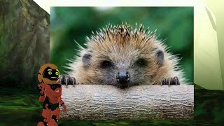 Cool Facts about Hedgehogs - Educational Video for Kids