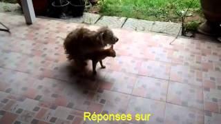 Cat Dog Crossbreed   Chaleurs Chien et Chat en Saillie