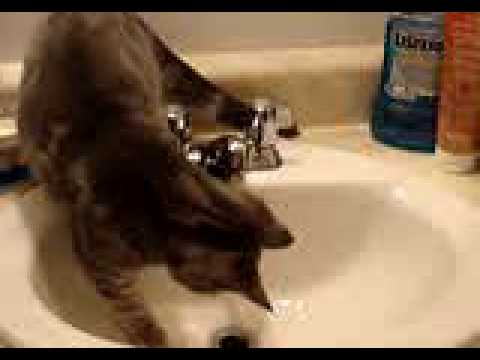 Kitten playing in sink