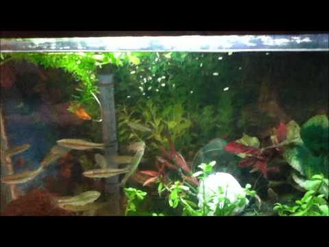 How To Care For  Minnows