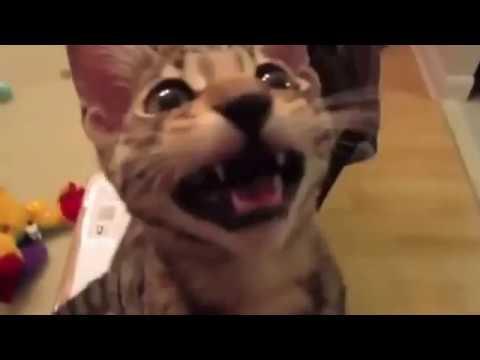 Кот лапает за сиськи видео фото 572-390