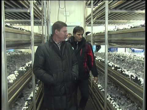 Всего за год грибная ферма кардинально изменила жизнь
