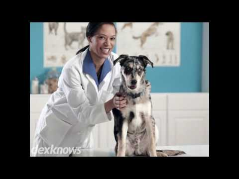All Pets Veterinary Clinic Bismarck Nd 58504 5568 Youtube