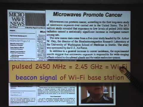 Wi-Fi health hazard for students