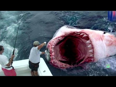 GIANT GREAT WHITE SHARK CATCH - real or fake? - YouTube