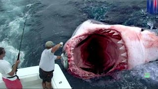 GIANT GREAT WHITE SHARK CATCH - real or fake?