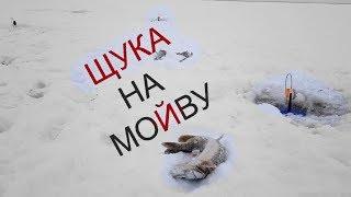 видео: Жерлицы срабатывают одна за одной! ЩУКА на МОЙВУ! Fishing for pike in Siberia.