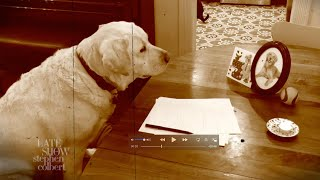 Dogs Are Struggling With Social Distancing, Just Like Us