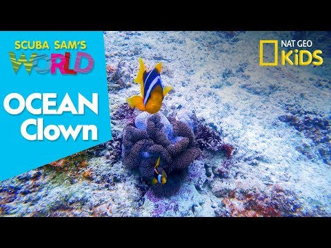 Ocean Clown | Scuba Sam's World