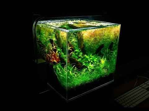 Nano 25L Nature Aquarium Planted Tank | Aquascape TV