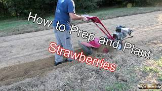 Planting Strawberries in the Fall    Useful Knowledge