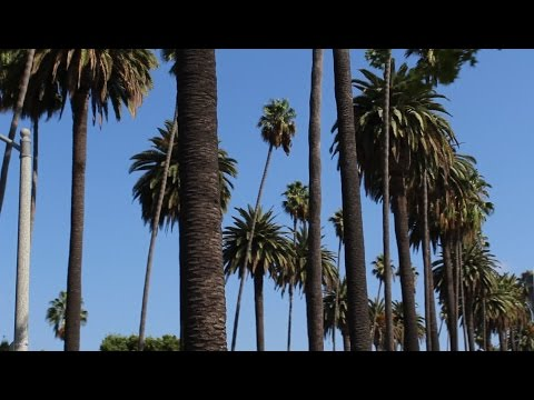 California Vacation Day 1 Pt. 1 | Arriving at LAX, Hollywood Tour, Driving to Anaheim
