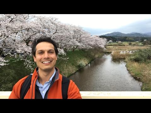 Secret Cherry Blossom Tunnel