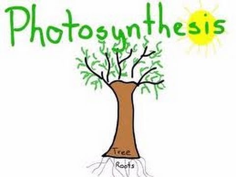 determining photosynthetic activity in plants using Differences in photosynthetic activity  sun and shade leaves of trees as well as high-light and low-light plants considerably differ in their relative.