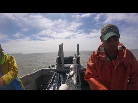 Bristol Bay Salmon Fishing