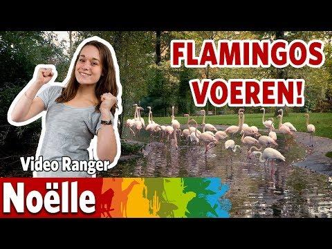 Ik ga de flamingo's voeren!