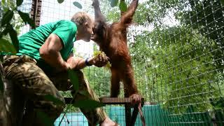 Олег Зубков играет с орангутаном Даной. Oleg Zubkov plays with orangutan