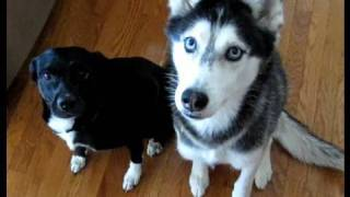 TRICKS & TREATS - Moki & Mishka
