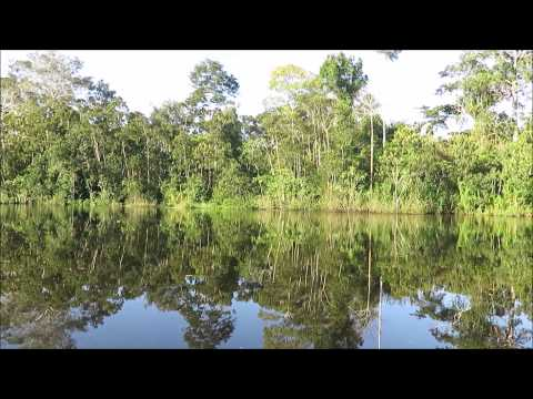 Peruvian Amazon 2015