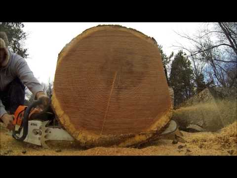STIHL MS 660 SHOOT OUT