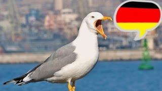 Учитесь понимать немецкий 'на слух'. Часть 1.