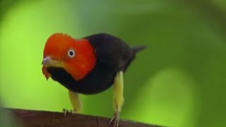 Animals Fight For Mates | BBC Earth