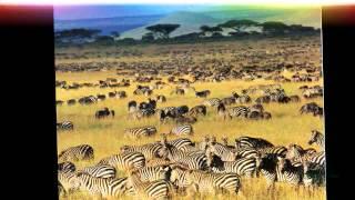 Достопримечательности. Национальный парк Серенгети.(Национальный парк Серенгети, расположенный в районе Великого Африканского разлома, занимает площадь около..., 2014-10-04T10:54:04.000Z)