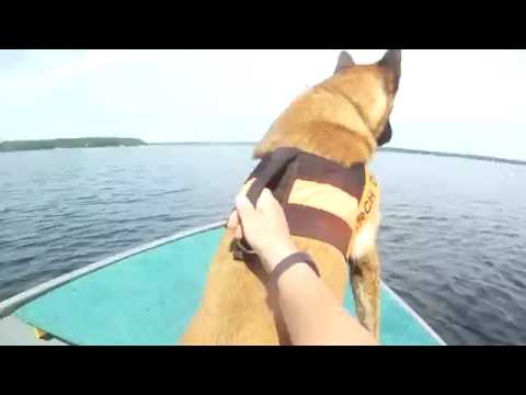 GBVSAR K9 Water Search Training – Blooper Reel