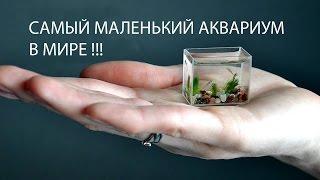 САМЫЙ МАЛЕНЬКИЙ АКВАРИУМ В МИРЕ! (Объём 10 мл.)