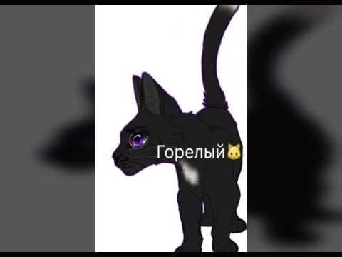 Коты Воители/ Имена и их образы/🐱🐈💗❤️
