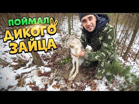 Жизнь в лесу! [2-Часть] Поймал дикого зайца! Заяц тушеный с овощами  в казане.