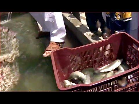 Pakistan to revitalise trout-farming business