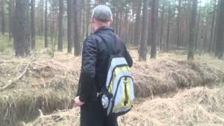 Приколы леса