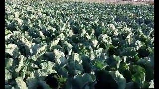 FARM IN DESERT