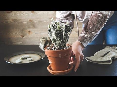 OMG MY HOYA! Propagating so many plants...