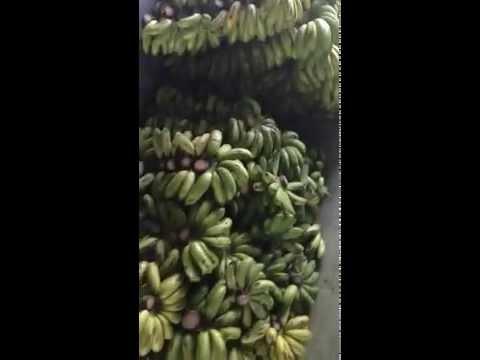 Bangladeshi bananas whole sell views