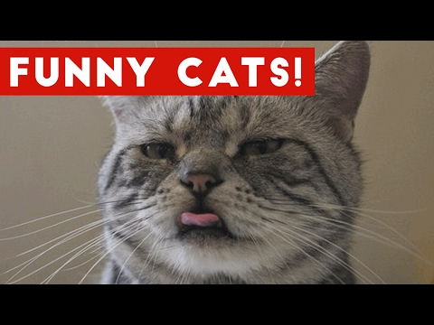 Thumbnail: Funny Cat Videos Compilation 2017 | Funny Pet Videos
