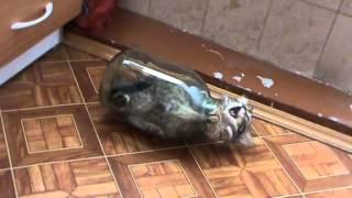 Котенок в банке