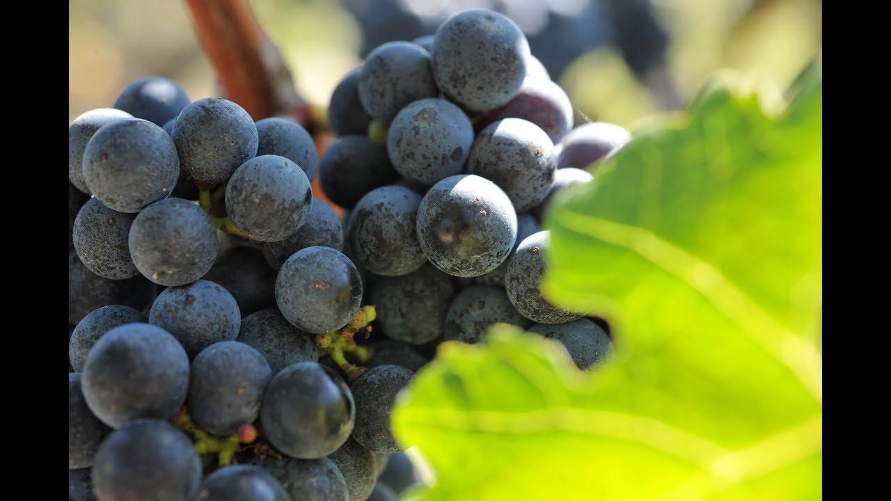 Vins et Vignobles du Sud-Ouest