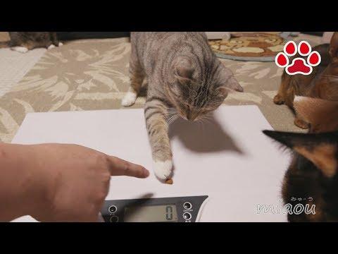2017 9月 猫達の体重測定【瀬戸の猫部屋日記】 body weights of cats