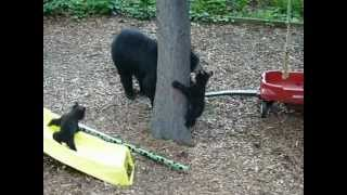 Three Bears On The Backyard Playground Of The Sweet Biscuit Inn