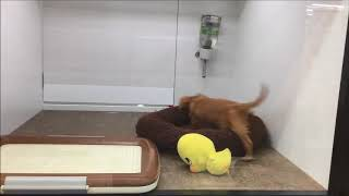 2018/03/16撮影 人間大好きな犬種☆ 子供と遊ぶのも得意な子が多いです!!...