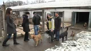 Неделя добрых дел - Гостомельский приют для животных
