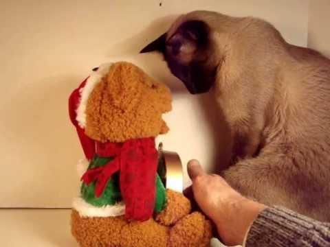 Talking Bear Christmas Countdown Clock Wmv Youtube