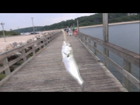 How To Catch Snappers With A Snapper Popper