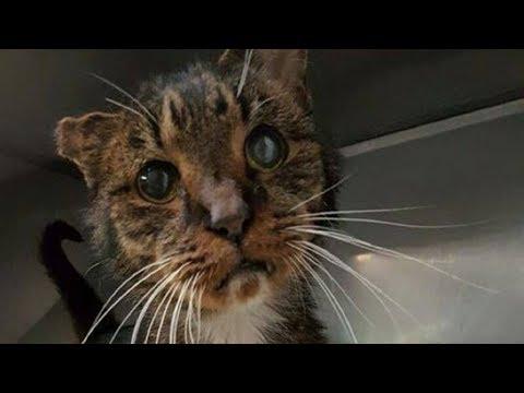 15-летний одноухий бродячий кот наконец дождался того, кто взял его к себе