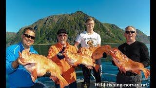 Морская рыбалка в Норвегии Wild Fishing Norway
